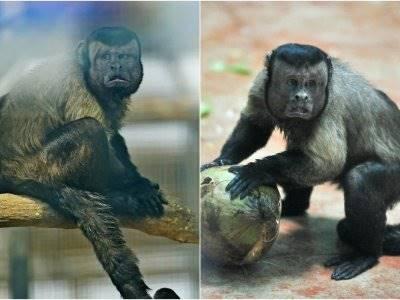 Heboh, Monyet 'Berwajah' Manusia Ini Lajang Seumur  Hidupnya
