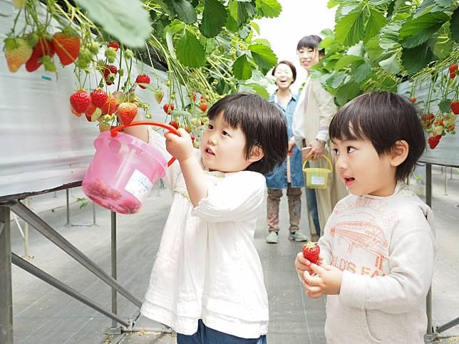เปิดพิกัด ฟาร์มเก็บผักและผลไม้อร่อย ๆ แบบจุใจที่โอกินาว่า