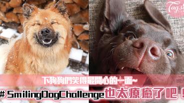 #SmilingDogChallenge,拍下狗狗們笑得最開心的一面~也太療癒了吧!