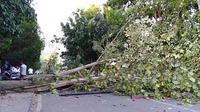 Pohon tumbang menutupi jalan pascakerusuhan di Manokwari, Papua Barat, Senin, 19 Agustus 2019. ANTARA