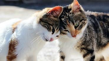 又撞名啦 日本家貓愛稱第一位是?