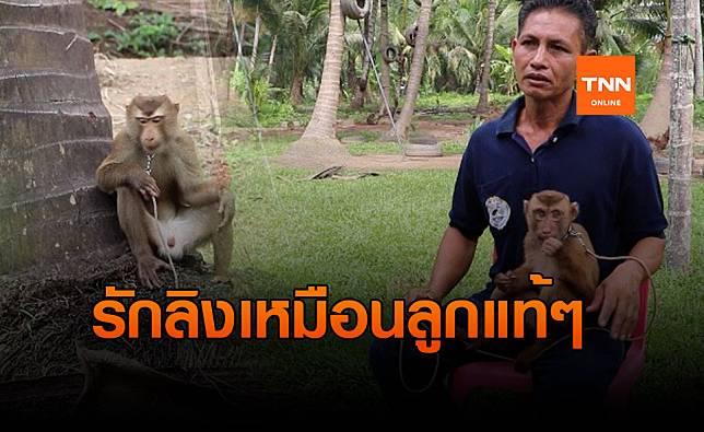 คนเลี้ยงลิง! ออกโรงโต้ ถอดเขี้ยวลิงเก็บมะพร้าว
