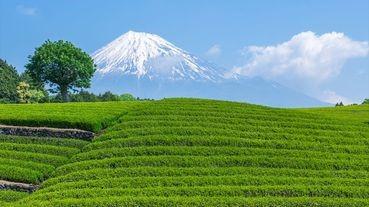 哪個縣的縣民最愛喝紅茶/綠茶?