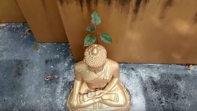 泰國一尊佛像後腦長小樹苗。圖/翻攝自Chiang Mai News YouTube