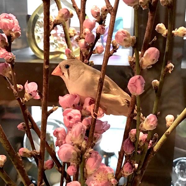ももの花とキン.jpg