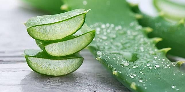15 Manfaat Lidah Buaya (Aloe Vera) untuk Kecantikan dan Kesehatan