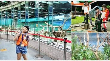 【台北景點】台北親子學習 - 職遊體驗《英語導遊》,台北市立動物園半日遊,完全不會英文也沒問題唷!