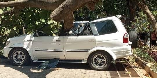 Tertimpa Pohon Tumbang, PNS di Cianjur Terluka
