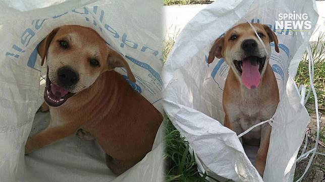 สะเทือนใจ! สาวโพสต์เจอน้องหมา ถูกยัดใส่กระสอบนำมาทิ้งไว้หน้าบ้าน