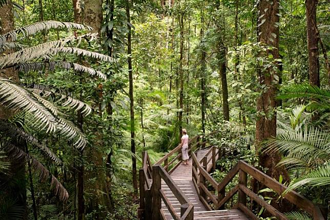 Daintree National Park, rainforest scenery in Queensland, Australia