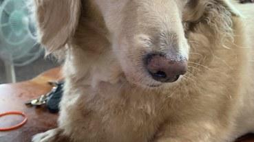 (寵物/醫療)臺灣動物寵物腫瘤治療懶人包,時時關心家中毛寶貝,讓牠陪你久久