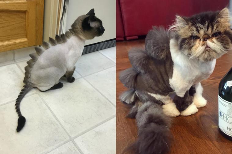 15 Tren Gaya Cukur Dinosaurus Bulu Kucing Ini Kocak Banget