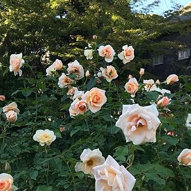 旧古河庭園のundefinedに実際訪問訪問したユーザーunknownさんが新しく投稿した新着口コミの写真
