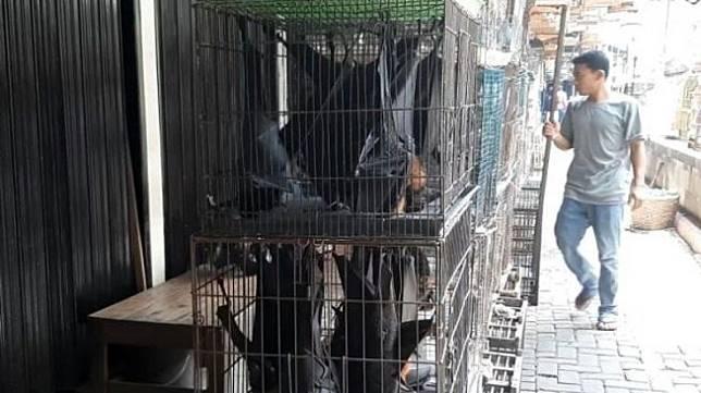 Kelelawar Buah di Manado dan Bogor Jadi Inang Coronavirus