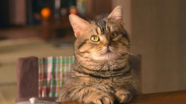 七部暖心貓咪日本電影精選!用可愛肉球征服人類的喵星人又萌又療癒
