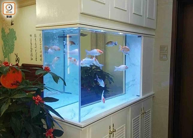 魚缸可以化煞,但如果錯放在吉位,那就浪費化煞功能,甚至會有反效果。(互聯網)