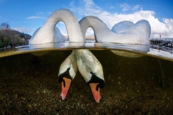 10 Foto Dalam Air yang Memukau