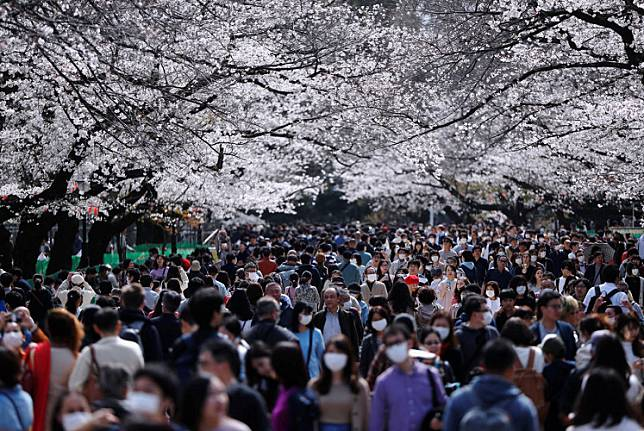 Visitors wearing protective face masks following an outbreak of the coronavirus disease (COVID-19) look at blooming cherry blossoms at Ueno park in Tokyo, Japan March 22, 2020. .