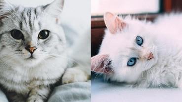 肉肉的小萌貓好可愛喔~看完真的好想把牠們回家養喔!