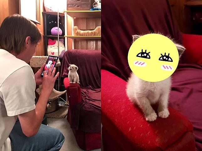夢幻小萌貓見鏡頭馬上喬好姿勢 超甜微笑擄獲眾貓奴的心!