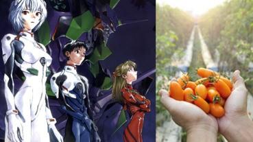 EVA動畫製作公司踩過界 連番茄都種埋?