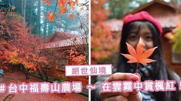台灣的楓葉終於變紅了!福壽山農場 ~ 在雲霧中賞楓紅, 不能錯過的絕世仙境!