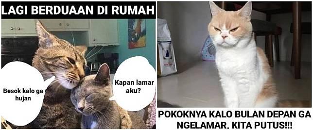 10 Meme Kucing Pengin Dihalalin Lucu Menggelitik