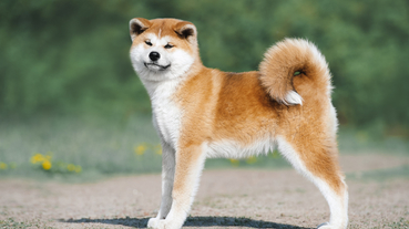 日本觀察|日本連寵物也邁向高齡化?在日本超幸福的高齡寵物福利與照顧
