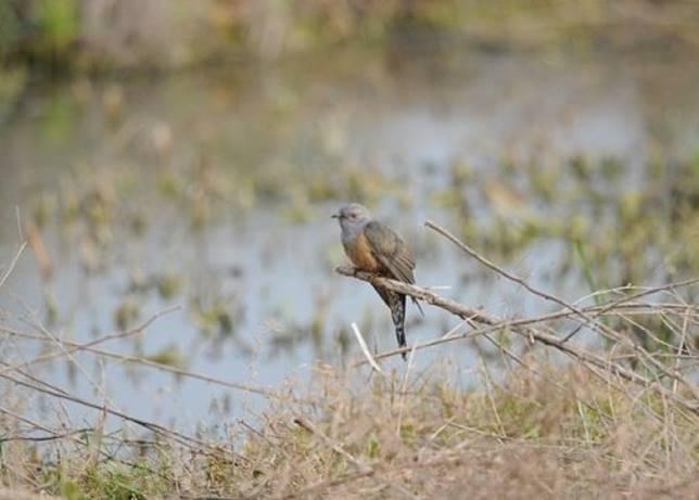 香港觀鳥會收錄各類雀鳥叫聲,讓大眾深入認識香港自然生態。