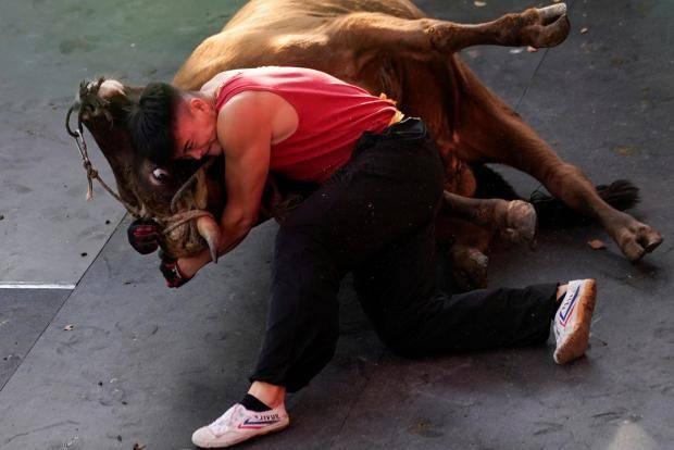 Banteng vs Manusia. Image via Reuters