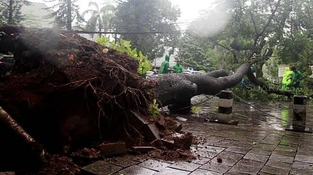 Pohon roboh di depan rumah dinas Gubernur DKI Jakarta Anies Baswedan Jalan Taman Suropati, Jakarta, Selasa (25/2). [Suara.com/Oke Atmaja]
