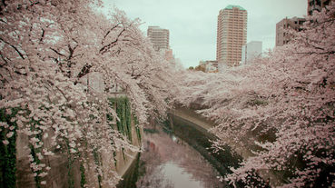 日本賞櫻不用人擠人?東京私房五大賞櫻景點揭密