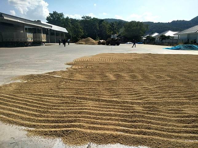 14 สหกรณ์เชียงราย เปิดจุดรับซื้อข้าวช่วยเกษตรกรสมาชิก