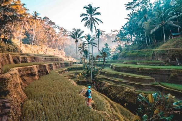 8 Alasan Ubud Tak Kalah Menarik dengan Destinasi Pantai di Bali