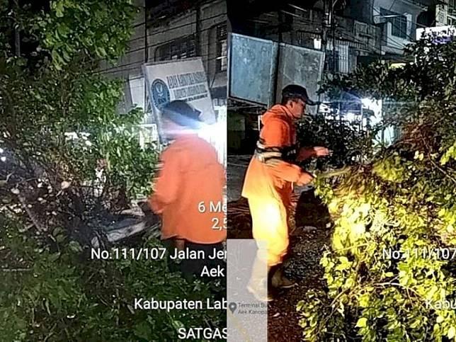 Akibat Hujan Deras dan Angin Kencang, Satu Pohon Tumbang di Depan Pos Polisi Aek Kanopan