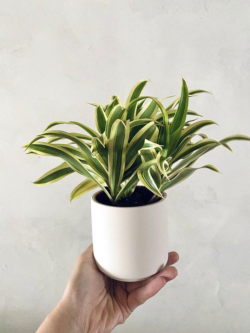生活植栽系列,北歐風格居家的療癒小夥伴!搭配素燒霧面陶瓷盆器,可自行在盆器上做繪圖~創造自己的風格喔~環保植物可當天然空氣清淨器~優點是擺著就可以空氣淨化喔