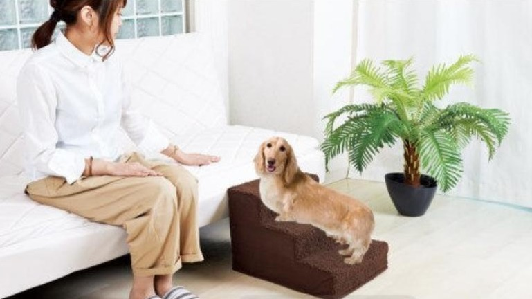 別讓狗狗因跳上跳下傷害了關節!安全『寵物階梯』保護毛孩遠離骨