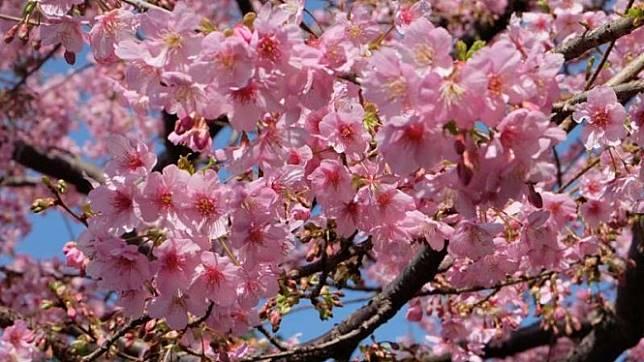 5 Destinasi Wisata Hemat di Jepang