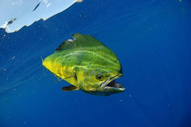 8 Jenis Ikan Ini Sebaiknya Tidak Kita Konsumsi, Kenapa Begitu