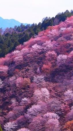 🦌奈良県🦌
