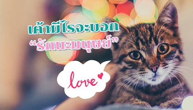 สัญญาณบอกรักเหล่าทาสอย่างสุดหัวใจของแมว