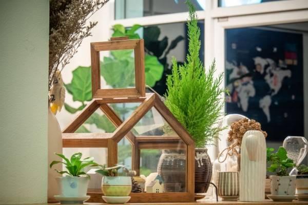Selain Bikin Cantik, Ini 8 Manfaat Lain Menaruh Tanaman di Dalam Rumah