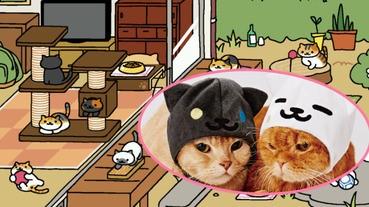 貓咪收集 X 寵物用品店!將奶油さん帶回屋企!!