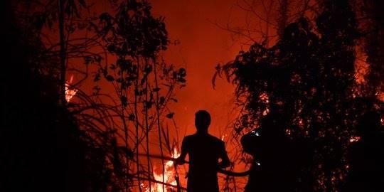 Petugas Berjibaku Padamkan Kebakaran Hutan di Pekanbaru. ©2019 AFP PHOTO/ADEK BERRY