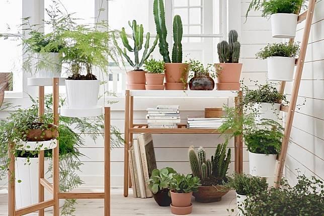 Suka Berkebun Yuk Buat Taman Rumah Mini