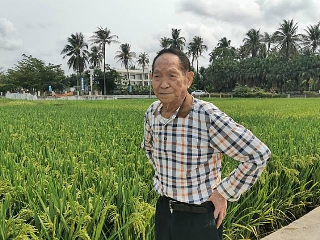 จีนเริ่มทดลองปลูก 'ข้าวทนดินเค็มด่าง' ในมองโกเลียใน