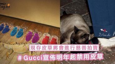 Gucci宣佈明年起禁用皮草!旗下現存皮草商品將會進行慈善拍賣,收益將捐贈動物權益組織及人權協會!