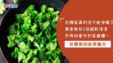 最怕煮飯洗菜不乾淨了!最容易長菜蟲「花椰菜」這樣洗最好~這2種方法教給大家,不會再怕吃到蟲了!