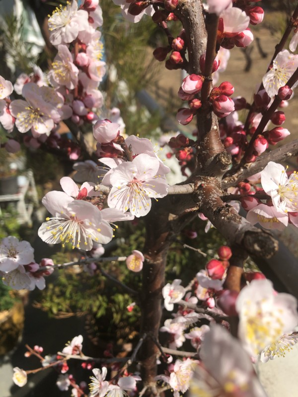 _var_mobile_Media_DCIM_136APPLE_IMG_6821.HEIC