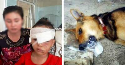 """Thanh Hóa, bé 6 tuổi bị chó cắn nát mặt, đứt tuyến lệ, mẹ kể: """"Chó nhà nuôi 3 năm, rất hiền"""""""